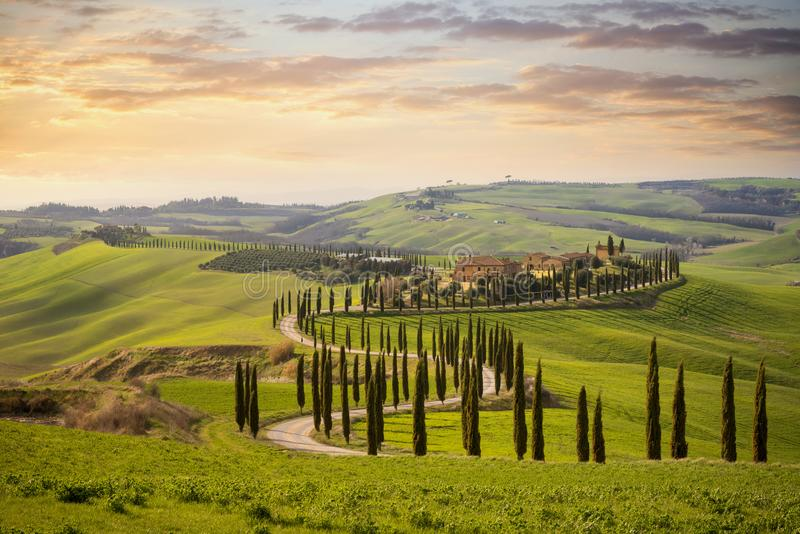 Tuscan hill with row of cypress trees and farmhouses at sunset. Tuscan landscape. Italy stock photos