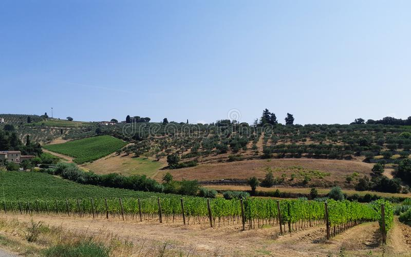 Tuscan hill with vineyard near olive trees royalty free stock images