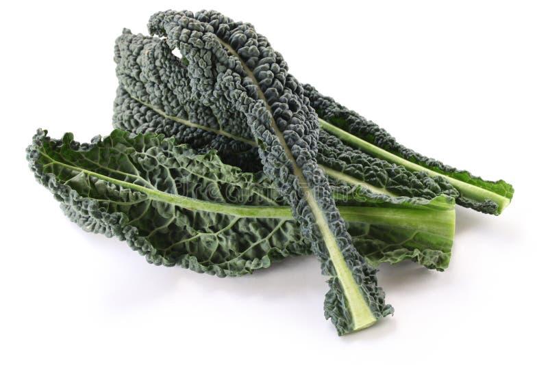 Svart kale, italiensk kale royaltyfri foto