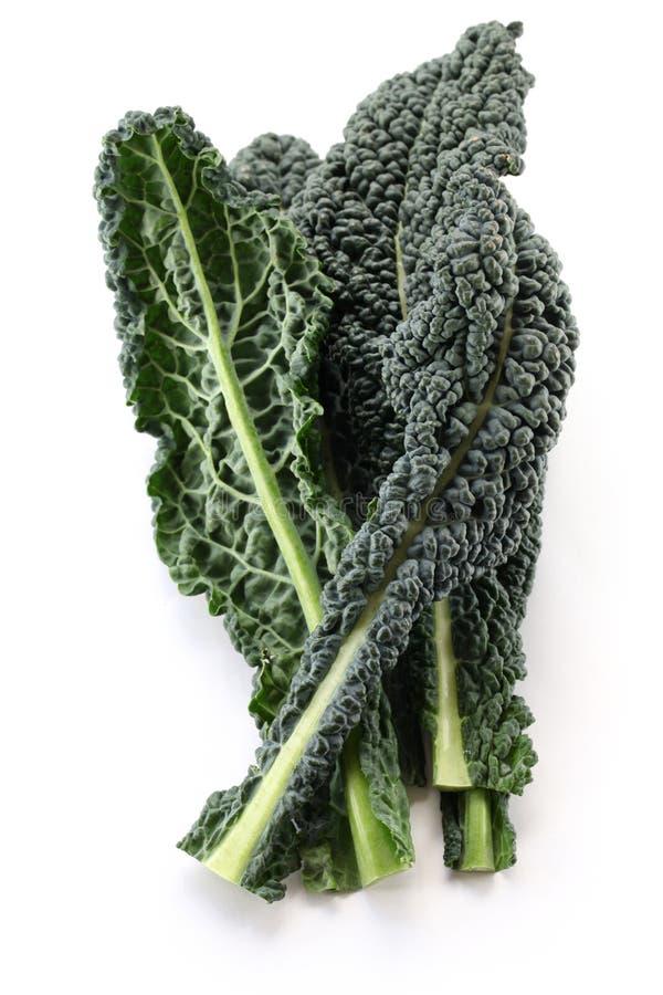 Svart kale, italiensk kale arkivfoton
