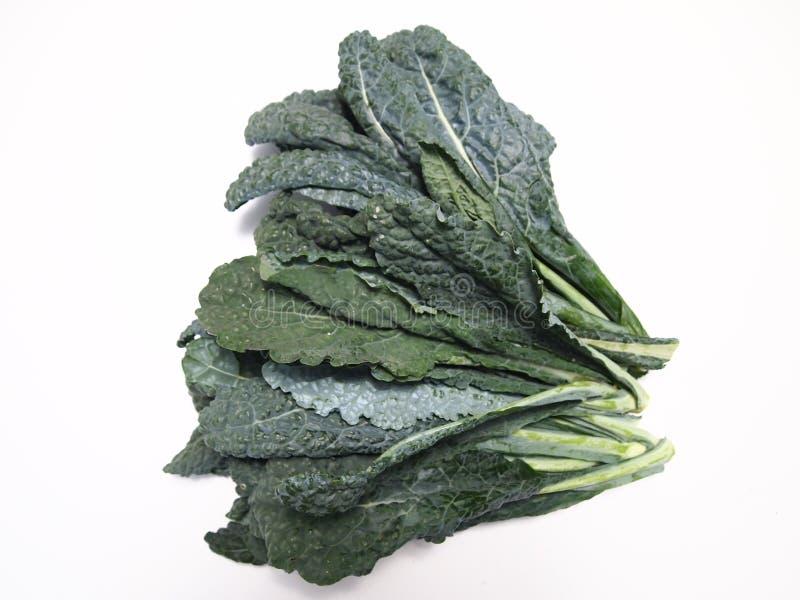 Tuscan Kale stock photos