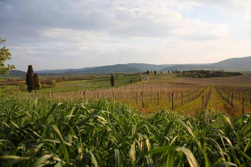 Download Tuscan Landscape Royalty Free Stock Photography - Image: 14546467