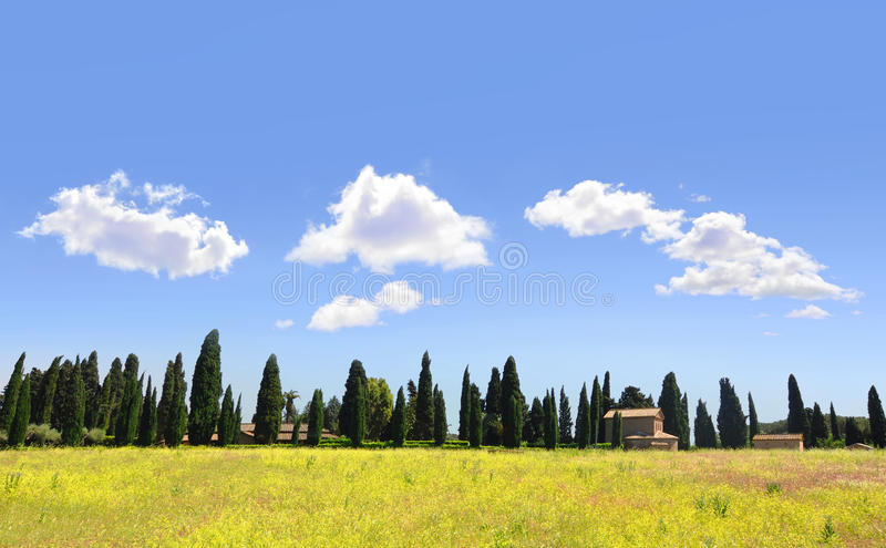 Tuscan landscape with yellow rapeseed and cypress. Iconic Tuscan landscape of Italy, with fields of yellow rapeseed and rows of cypress trees royalty free stock photos