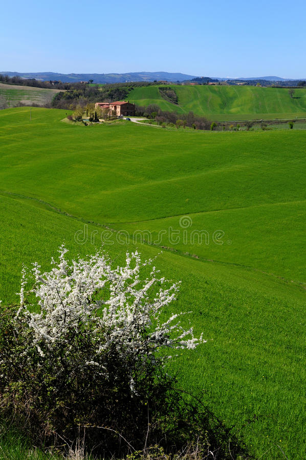 Tuscan rural landscape val'd'orcia Italy royalty free stock photography