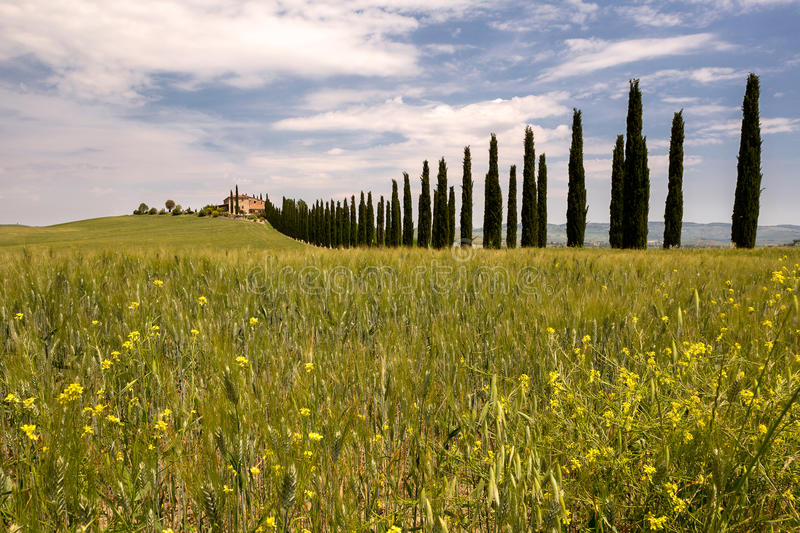 Tuscan villa. Long row of cypress trees leading to a Tuscan villa near San Quirico d'Orcia royalty free stock photography