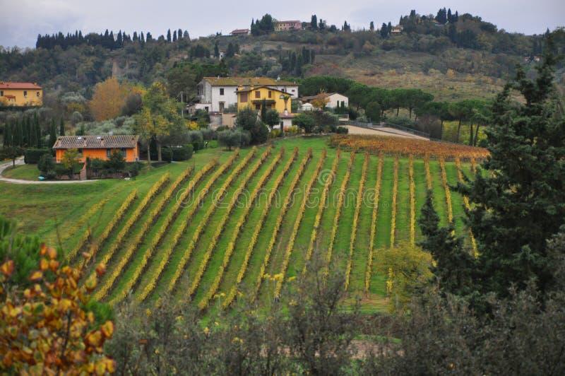 Tuscan vingårdar nära den Pisa chiantien arkivfoto