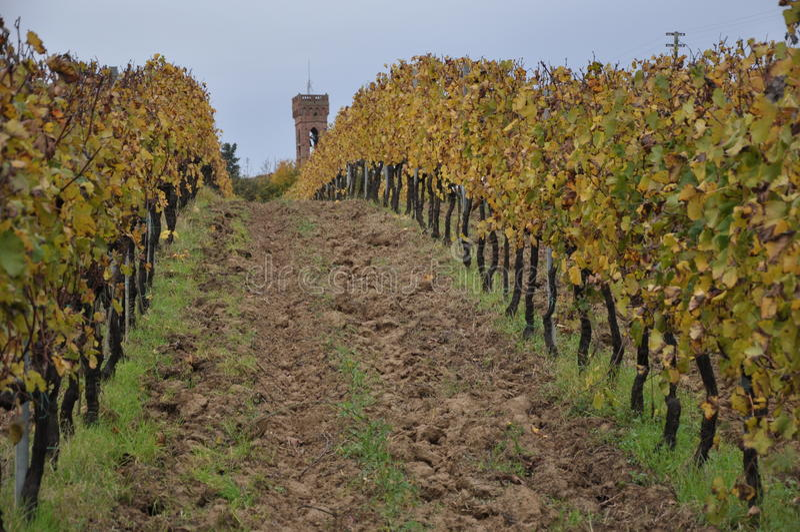 Tuscan vingårdhöst royaltyfria bilder