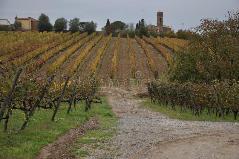 Tuscan vingårdhöst arkivbilder