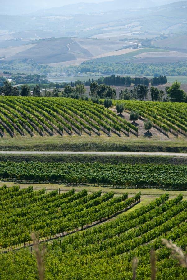 Tuscan Vinyard. Rolling Tuscan vinyard stock photography