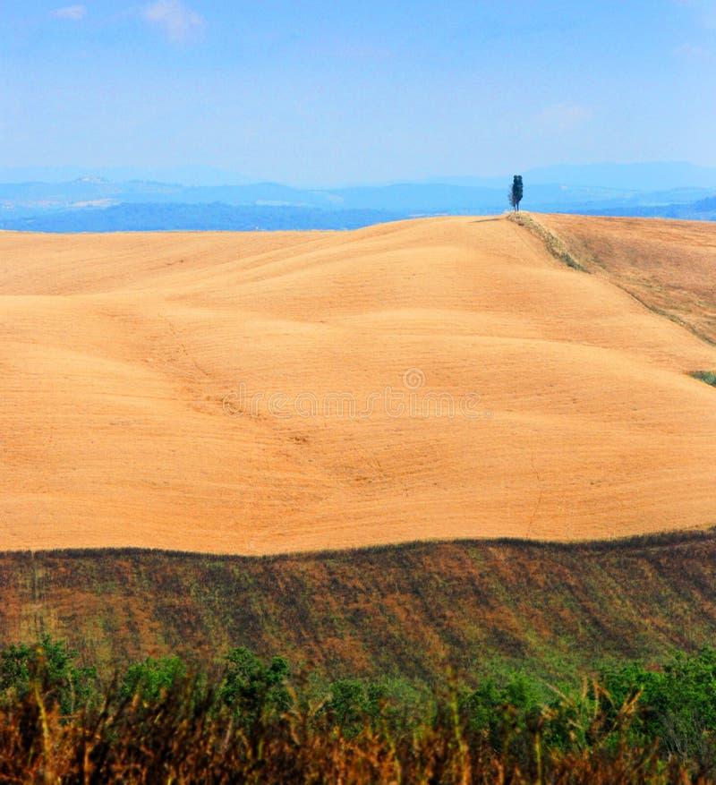 Tuscan wheat field royalty free stock photo