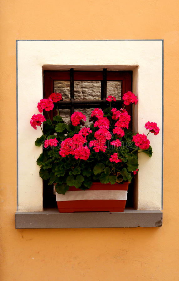 Window with flowers stock image