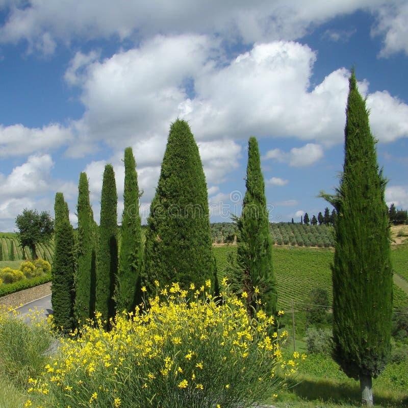 Free Tuscany Stock Photography - 11256862