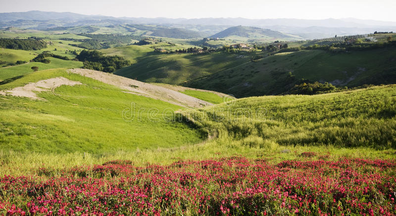 Download Tuscany stock image. Image of field, italian, grass, green - 19822577