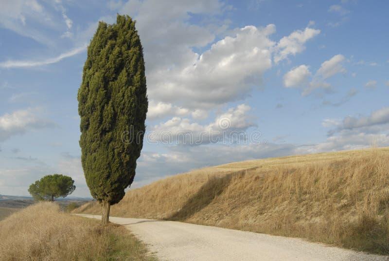 tuscany royaltyfri bild