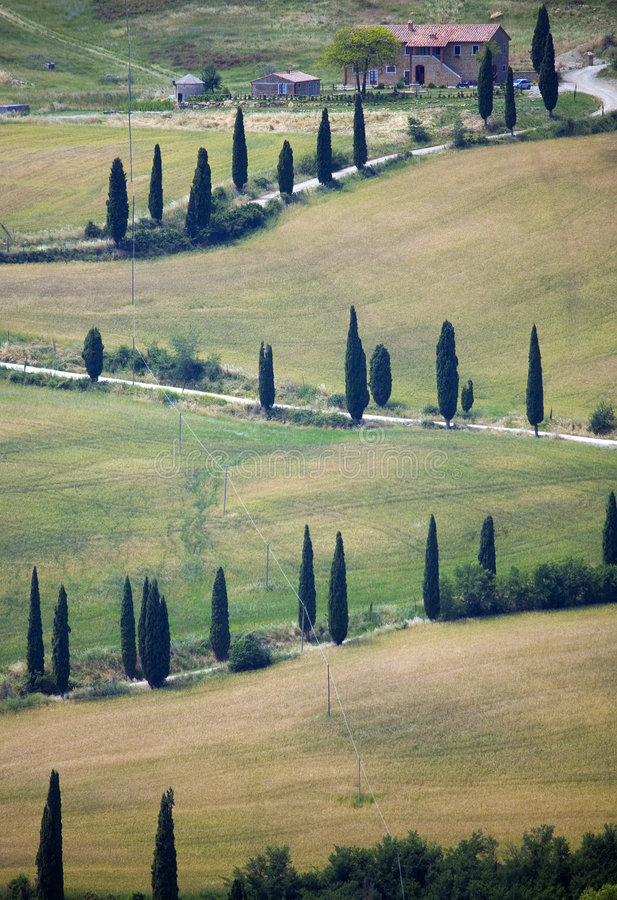 Free TUSCANY Countryside, Devious Street With Cypress Royalty Free Stock Photos - 6353028