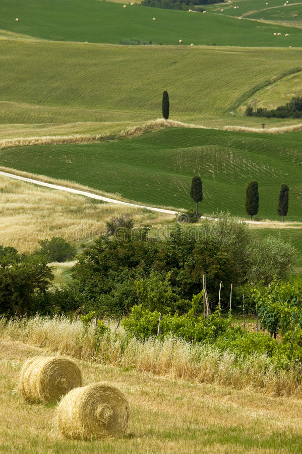 Download TUSCANY Countryside With Farms And Hay-ball Stock Image - Image: 6321463