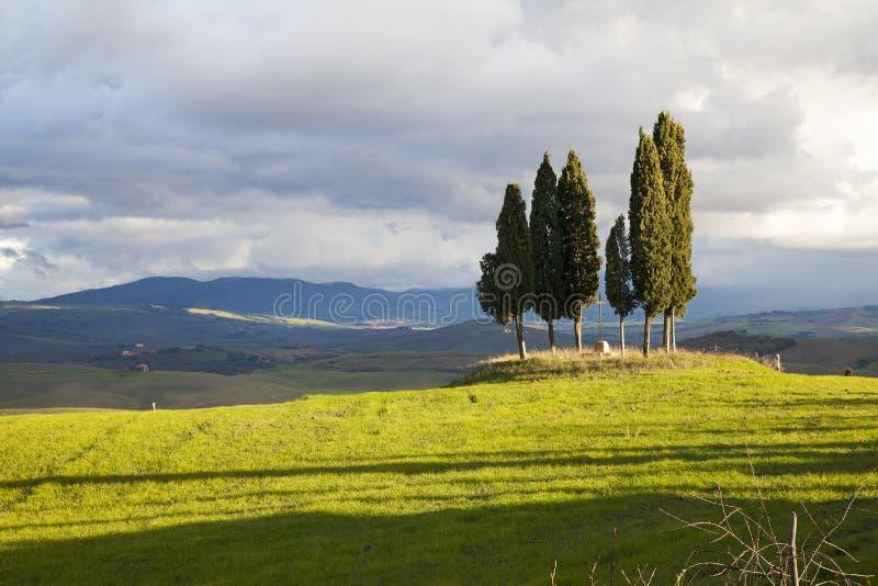 Tuscany cypress stock photo