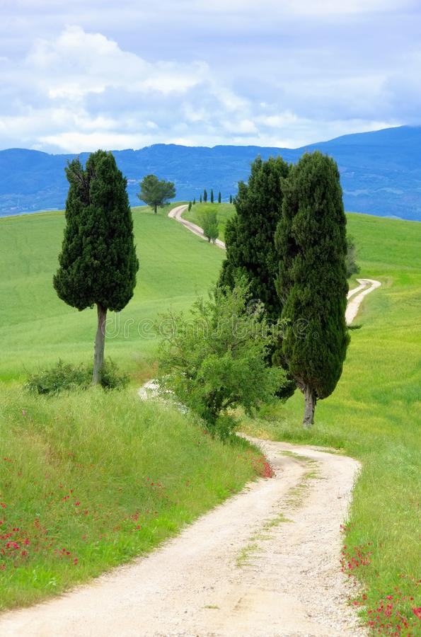 Tuscany Cypress Trees With Track Royalty Free Stock Images