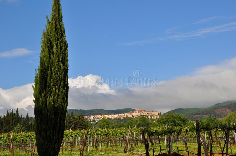 Tuscany cypress village vineyard royalty free stock photography