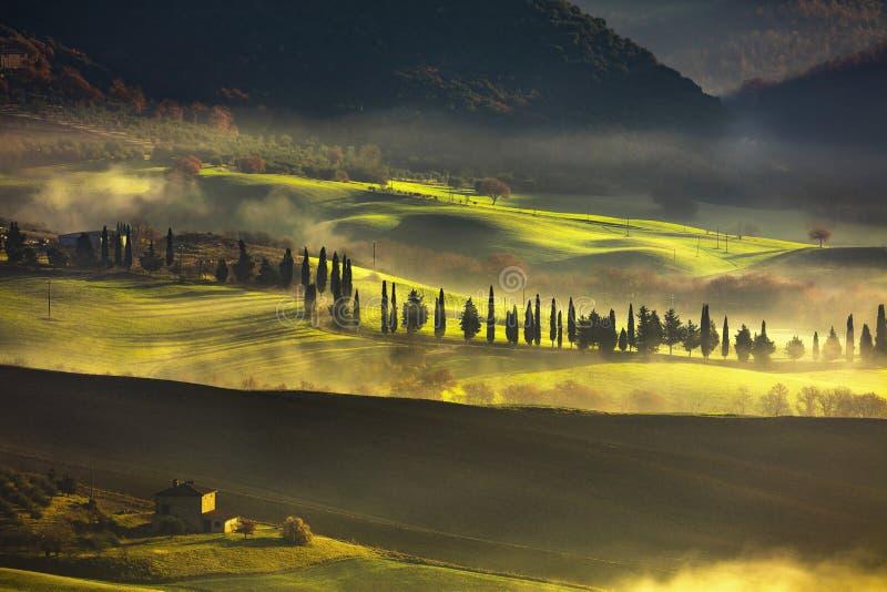 Tuscany dimmig morgon, jordbruksmark och cypressträd italy royaltyfri bild