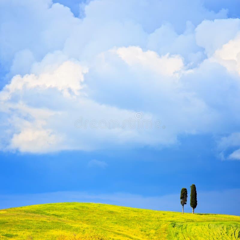 Tuscany, dwa osamotnionego cyprysowego drzewa i wiejskiego wzgórze. Siena, Orcia V zdjęcia royalty free