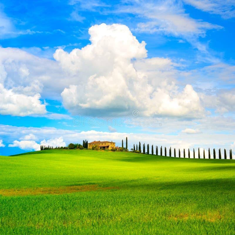 Tuscany, farmland, cypress trees row and field. Siena, Val d Orc royalty free stock photo