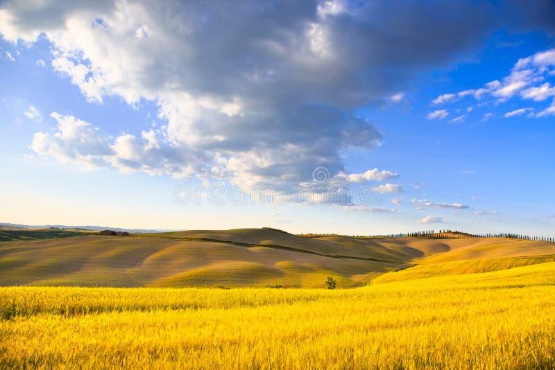 Tuscany, farmland, wheat and green fields. Pienza, Italy. stock photography