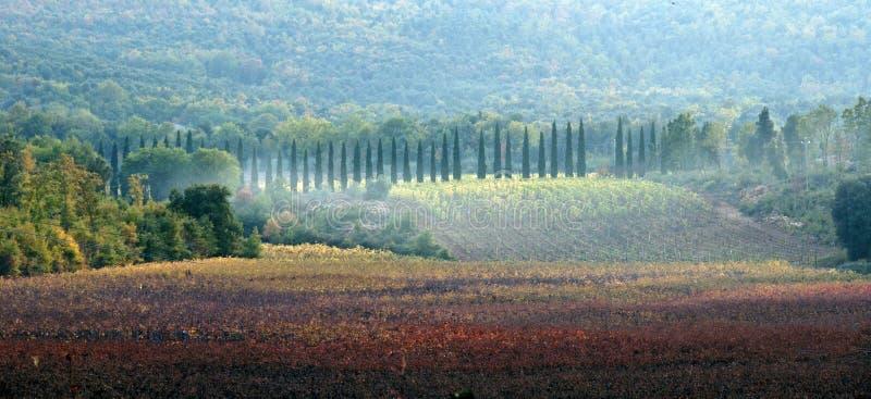 Tuscany fields