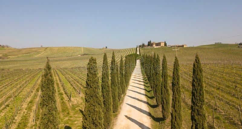 Tuscany flyg- landskap av en cypressaveny nära vingårdarna royaltyfri foto