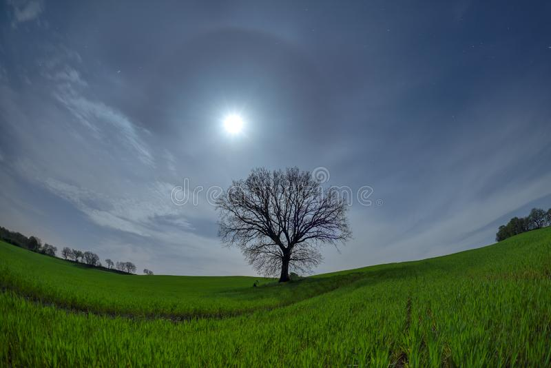 Tuscany full moon night landscape in the spring time with green field. And isolated tree royalty free stock photo