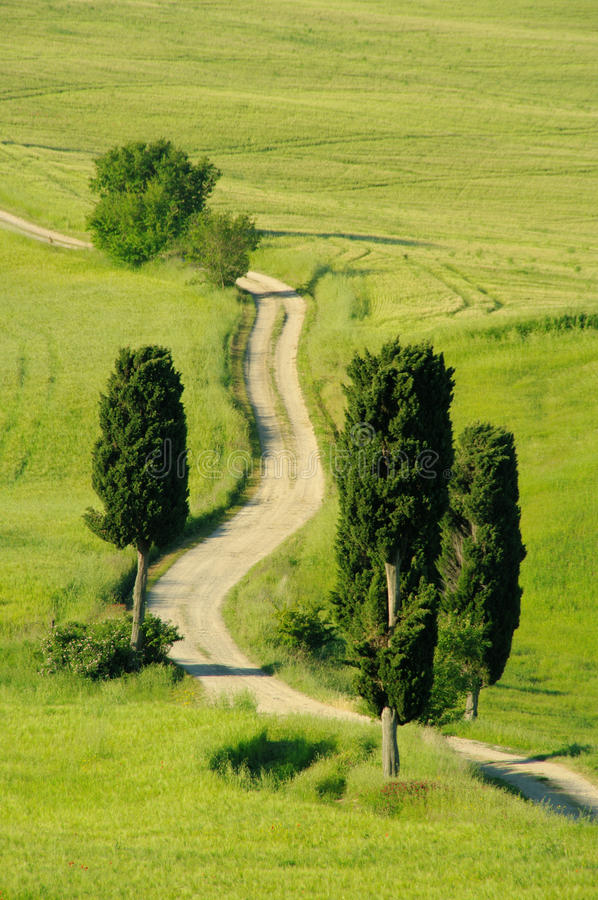 Download Tuscany hills stock photo. Image of meadow, dust, siena - 14854024