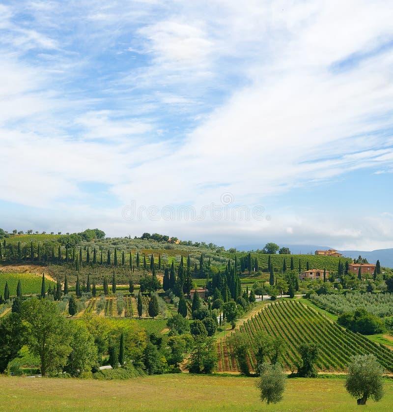 Tuscany Italien vingårdar royaltyfri bild