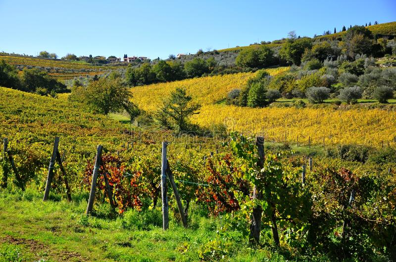 Agriculture in Tuscany , Italy royalty free stock photography