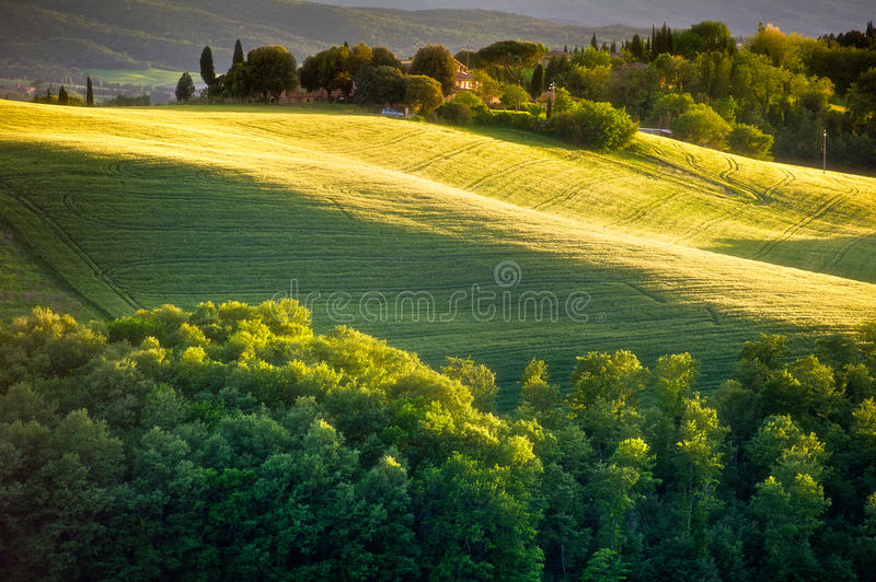 Download Tuscany - Italy stock image. Image of scenery, grass - 28603905