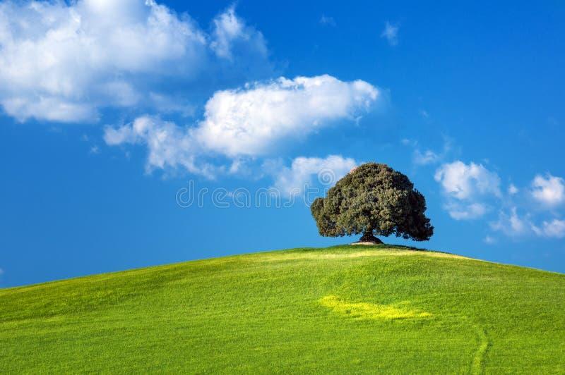 Tuscany - Italy Royalty Free Stock Images