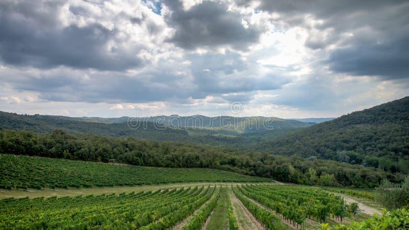 Tuscany, Italy - September 05, 2014: A wineyard in autumn in tuscany, Italy royalty free stock photos