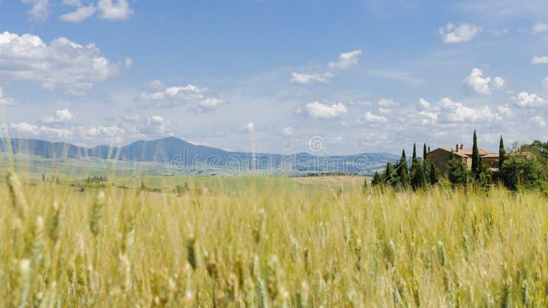 Tuscany krajobraz, Włochy, Europa: pszeniczni pola i typowy gospodarstwo rolne dom obraz royalty free