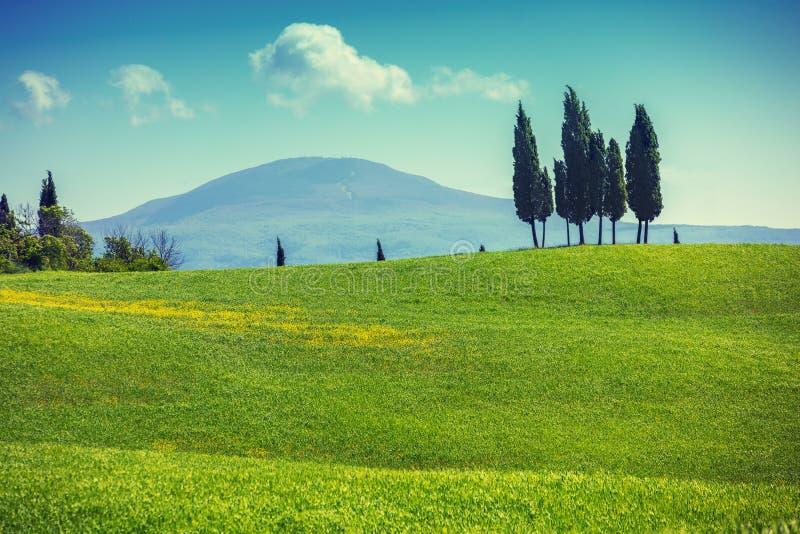Tuscany krajobraz w wiośnie Grassed kołysań się pola na wzgórzach zdjęcie royalty free