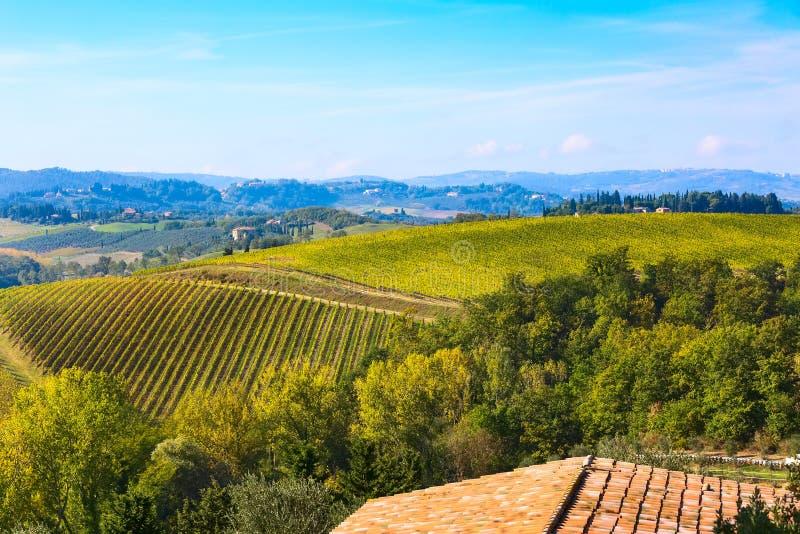 Tuscany krajobraz z winniców rzędami, Włochy fotografia royalty free