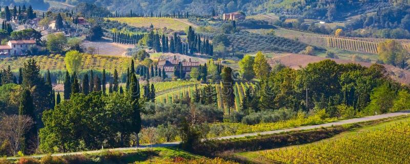Tuscany krajobraz z winnicami, cyprysowi drzewa obrazy royalty free