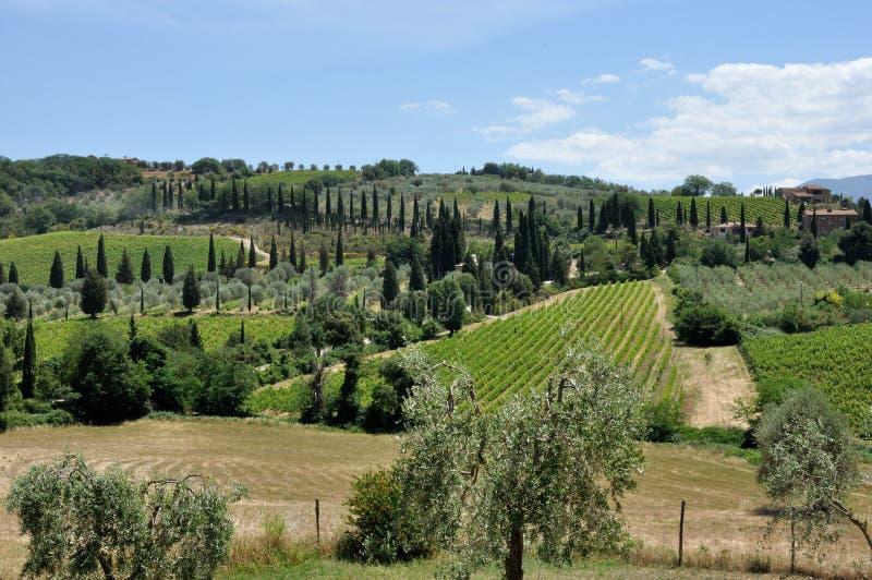 Tuscany krajobrazu drzewo oliwne 1 i wzgórza obrazy stock