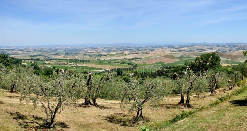 Tuscany krajobrazu wzgórza i drzewo oliwne fotografia royalty free