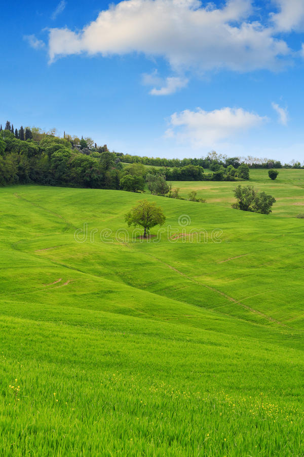 Free Tuscany Landscape, Beautiful Green Hills And Lonely Tree Springt Stock Photography - 86654362