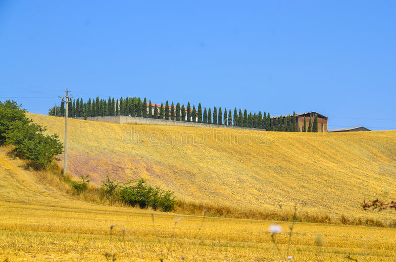 Tuscany landscape with cypress trees. royalty free stock photo