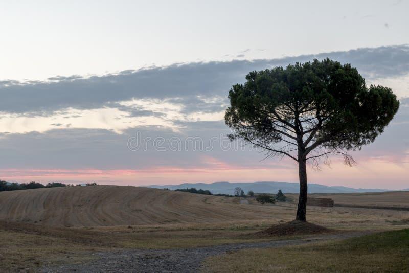 Tuscany landscape royalty free stock photos