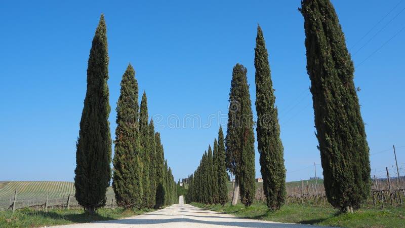 Tuscany landskap av en cypressaveny nära vingårdarna arkivbild
