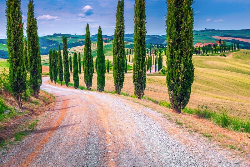 Tuscany landskap med krökta lantliga väg- och kornfält, Italien royaltyfri foto
