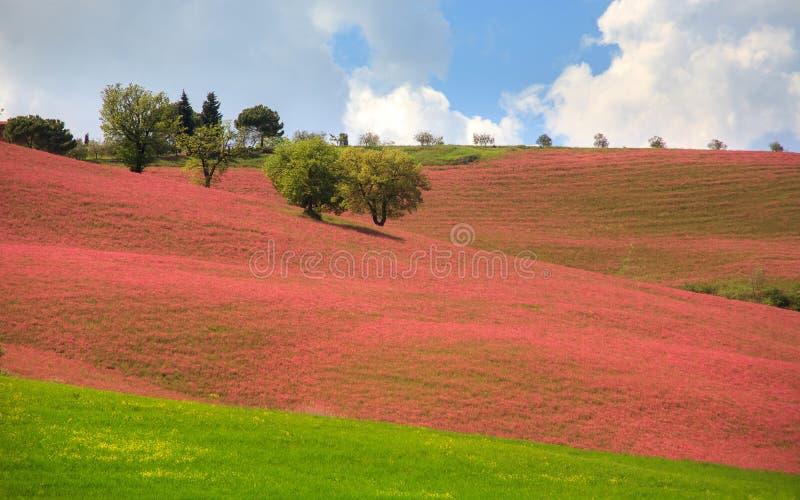Tuscany liggande royaltyfri bild