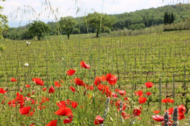 Tuscany natur fotografering för bildbyråer