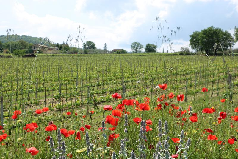 Tuscany natur arkivfoton